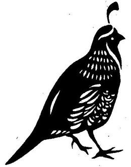 download cool quail silhouette clipart silhouette common quail
