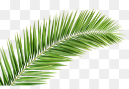 palm leaves clipart Palm trees Palm branch Clip art