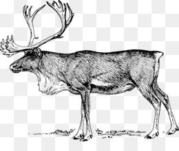 驯鹿图像剪辑驯鹿麋鹿剪辑艺术