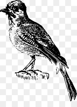 perching bird illustration black and white clipart Finches Sparrow Lark