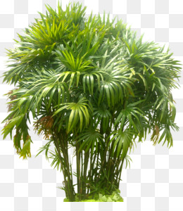 Tree Plants Bamboo Plant Grass Png Clipart Free Download