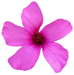Download little pink flower clipart pink flowers clip art mightylinksfo