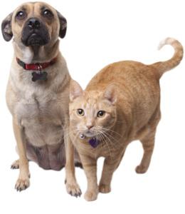 medi-direct猫和狗超声波跳蚤剪纸艺术猫狗的小狗