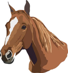 马头剪辑美国四分之一马阿拉伯马剪辑艺术