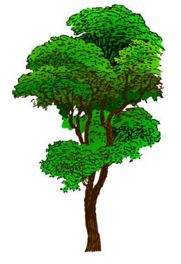 热带雨林剪贴画