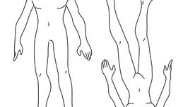 Download male body template clipart Finger Human body Sketch