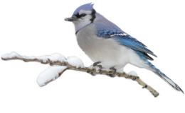 冬眠剪辑鸟类桌面壁纸剪辑艺术
