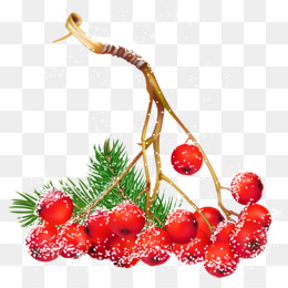 christmas berries png clipart Christmas Day Clip art
