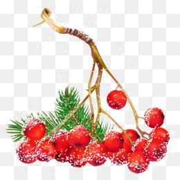 圣诞节圣诞节浆果png剪纸艺术剪辑艺术