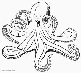 download printable octopus colouring page clipart octopus colouring
