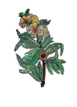 Herb clipart Herb Clip art
