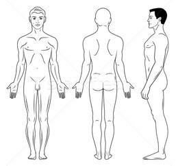 Download Body Outline Front And Back Clipart Human Diagram