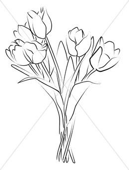 download tulip sketch clipart line art drawing clip art