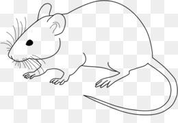 老鼠黑白PNG剪贴画老鼠实验室老鼠剪贴画