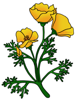 Poppy flower clipart about 73 free commercial noncommercial png mightylinksfo