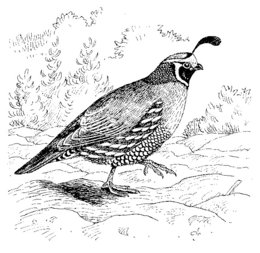 beak black and white clipart about 3160 free commercial