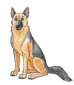 Download Drawing Of A German Shepherd Clipart German Shepherd Puppy - German-shepherd-drawings