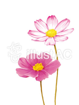 download petal clipart garden cosmos new year card illustration art flower pink plant dahlia clipart free download