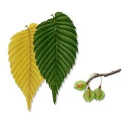 Tree Plant Leaf Transparent Png Image Clipart Free Download